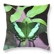 Peacock Swallowtail Throw Pillow