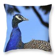 Indian Peacock Portrait Throw Pillow
