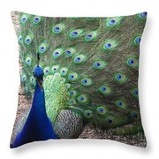 Peacock Up Close Throw Pillow