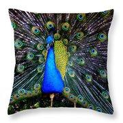 Peacock Wallpaper Throw Pillow