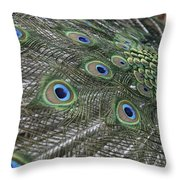 Peacock's Feathers Throw Pillow