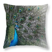 Peacocok 1 Throw Pillow
