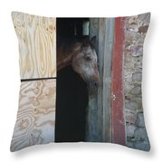 Peak A Book Horse Throw Pillow