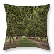 Pecan Orchard Sahuarita Arizona Throw Pillow
