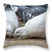 Pecking Pigeons Throw Pillow