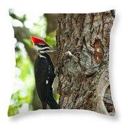 Pecking Woodpecker Throw Pillow