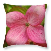Peek A Boo Dogwood Throw Pillow