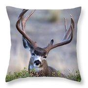 Peek A Boo Throw Pillow
