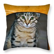 Peekaboo Kitty Throw Pillow