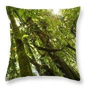 Peeking In Costa Rica Rain Forest Throw Pillow