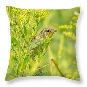 Peeking Warbler Throw Pillow