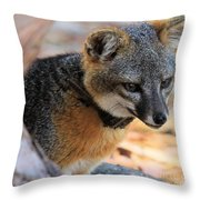 Peering Out Throw Pillow