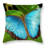 Peleides Blue Morpho Throw Pillow