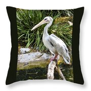 Pelican At Rest Throw Pillow