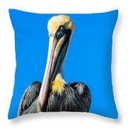 Pelican In Key Largo Throw Pillow