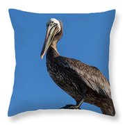 Pelican Watch Throw Pillow