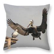 Pelican Wins Sea Gull Looses Throw Pillow