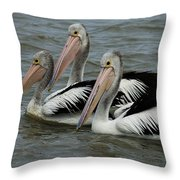 Pelicans In Australia 3 Throw Pillow