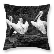 Pelicans Mono Throw Pillow