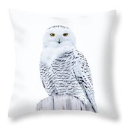 Penetrating Stare Throw Pillow