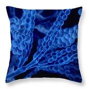 Penicillium With Spores Throw Pillow