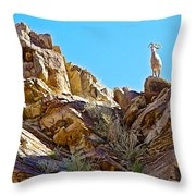Peninsular Bighorn Sheep From Borrego Palm Canyon Trail In Anza-borrego Desert Sp-ca Throw Pillow