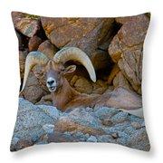 Peninsular Desert Bighorn Throw Pillow