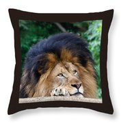 Pensive Lion Throw Pillow