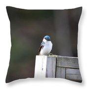 Pensive Tree Swallow Throw Pillow