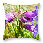 Penstemon On Miles Canyon Trail To Canyon City Near Whitehorse-yk  Throw Pillow