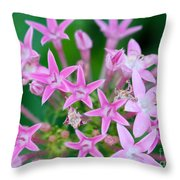 Pentas 'cranberry Punch' Flowers Throw Pillow