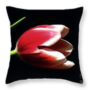 Peppermint Tulip Throw Pillow
