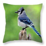 Perched Bluejay Throw Pillow