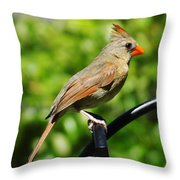 Perched Cardinal Throw Pillow