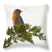 Perched Eastern Bluebird Throw Pillow