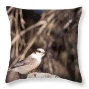 Perched Grey Jay Perisoreus Canadensis Watching Throw Pillow