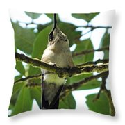Perched Hummingbird Throw Pillow
