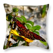 Perched On A Daisy Throw Pillow