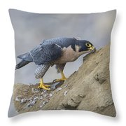 Peregrine Cleaning Beak Throw Pillow