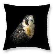 Peregrine Falcon Throw Pillow