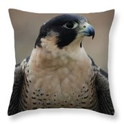 Peregrine Profile Throw Pillow