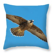 Peregrine Young Screaming For Food Throw Pillow