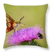 Perfect Hummingbird Moth Throw Pillow