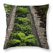 Perfect Lines Throw Pillow by Anne Gilbert