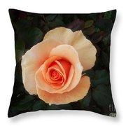 Perfect Peach Rose Throw Pillow