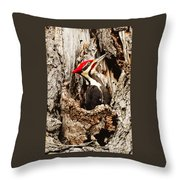 Perfect Pileated Pose Throw Pillow
