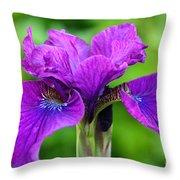 Perfect Purple Specimen Throw Pillow
