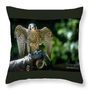 Perigrine Falcon Throw Pillow