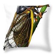 Periodical Cicada Throw Pillow