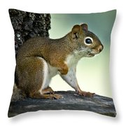 Perky Squirrel Throw Pillow